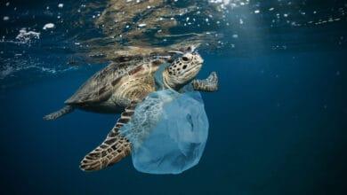 صورة أكياس تتحلل في المياه لمحاربة النفايات البلاستيكية