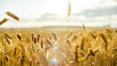 صورة كيف يمكن للمؤسسات توفير نظام غذائي يخدم العالم؟