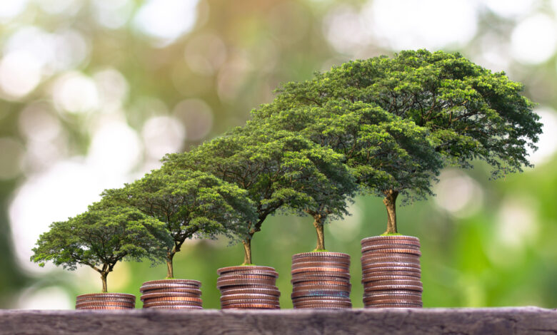 الاستدامة المالية