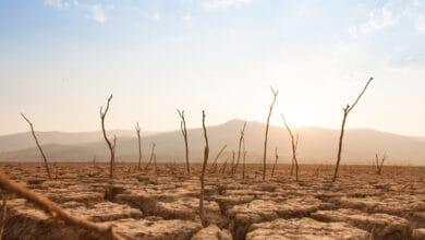 صورة اتباع نهج قائم على نُظم الشعوب الأصلية لمواجهة أزمة المناخ